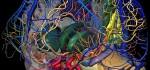 دانلود نرم افزار پزشکی Brain 3D Anatomy v1.0.2 اندروید